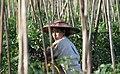 Inle-See-Landwirtschaft-40-Arbeiterin im Boot-gje.jpg