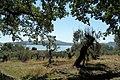 Isola Polvese - panoramio (5).jpg