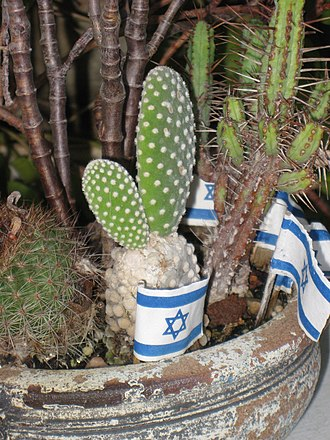 Sabra (person) - A cactus flowerpot with the flag of Israel