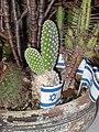 Israeli flag & cactus.jpg