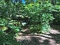Jake's Rocks Overlook Trail - 20200806 - 07.jpg