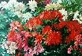 Jan Visser jr. Bloeiende rhododendrons.jpg