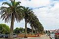 Jardim do Rossio - panoramio.jpg