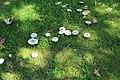 Jardin de l'Europe à Verrières-le-Buisson le 20 août 2017 - 6.jpg