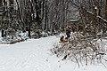 Jardin naturel (Paris) sous la neige 07.jpg