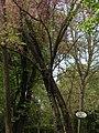Jardines del palacio de aranjuez.jpg