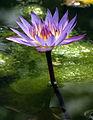 Jardins des Martels 2014-06-01T12-42-13.jpg
