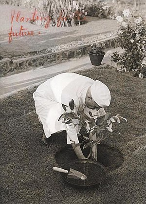 Aarey Milk Colony - Pandit Jawaharlal Nehru, former PM of India, planting a sapling. Photograph taken during the inauguration of Aarey Colony on March 4, 1951.