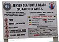 Jensen Sea Turtle Beach.jpg