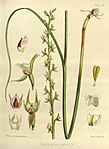 Joseph Dalton Hooker - Flora Antarctica - vol. 3 pt. 2 plate 111 (1860).jpg