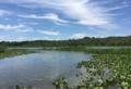Jug Bay Wetlands Sanctuary.png