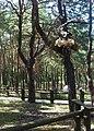 Jurapark, Solec Kujawski, Poland (www.juraparksolec.pl) - panoramio (45).jpg