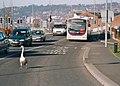 Just Swanning Along In Blackburn (1) - geograph.org.uk - 2852946.jpg