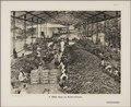 KITLV - 2439 - Kurkdjian, N.V. Photografisch Atelier - Soerabaja - Logging and sorting shed for bibit in a sugar factory in East Java - 1913.tif