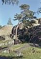 Kaivopuiston kallioita - XLVIII-2004 - hkm.HKMS000005-km0000m8r8.jpg