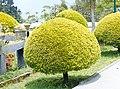 Kalimpong Flora and Fauna9.jpg