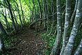 Kannabe highlands Toyooka Hyogo pref Japan03s5.jpg