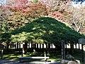 Kasamatsu at Kasumigajo.jpg