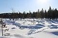 Kattajärvi Inari Suomi - Finland 2013-03 019 reindeer track.jpg