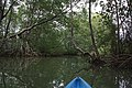 Kayaking in the mangrove in Isla de Damas - panoramio.jpg