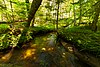 Keller Whitcomb Creek Woods.jpg