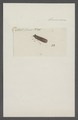Kend - Print - Iconographia Zoologica - Special Collections University of Amsterdam - UBAINV0274 042 06 0030.tif