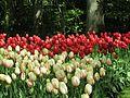 Keukenhof Garden (40).JPG