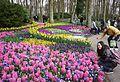 Keukenhof flowers park, Netherlands (33096051910).jpg