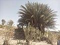 Kharan Tehsil, Pakistan - panoramio (13).jpg