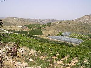 Shiloh (biblical city) - Image: Khirbet Seilun 31