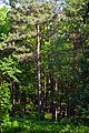 Kivertsi Volynska-Dubososnyna nature monument-view with boards.jpg