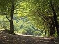 Kosovo forest.jpg