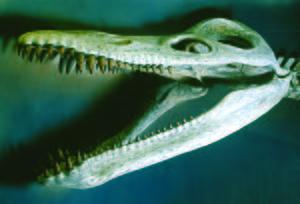 Kronosaurus - Reconstructed skull of the Harvard specimen