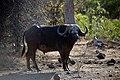 Kruger National Park, South Africa (36066842313).jpg