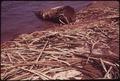 LOW TIDE EXPOSES STEEL LOG BANDS DUMPED IN THE SNOHOMISH RIVER - NARA - 552158.tif