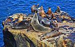 La Jolla Cove, Ca. Sea Lions (12096651634).jpg