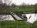 La fila dei cormorani - panoramio.jpg