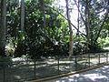 Lagos Parque del Este 004.JPG