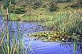 Lake, Cassop Vale - geograph.org.uk - 892570.jpg