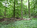 Landschaftsschutzgebiet Pferdebruch Eickholt Melle Datei 3.jpg