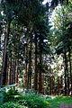 Landschaftsschutzgebiet Turmberggebiet bei Wesseln - Waldweg 7.jpg