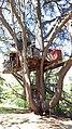 Langeais Cabane dans l'arbre.jpg
