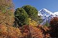 Lanin volcano in autumn.jpg