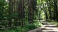 Lasy kostkowskie , On a hiking trail through Kostkowo woods - panoramio (4).jpg