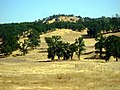 Latrobe Road, Latrobe, California - panoramio (2).jpg