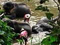 Le bain des éléphants 01.JPG