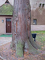 Lebensbaum Aschach, 1.jpg