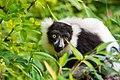 Lemur (26245063829).jpg