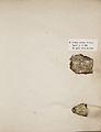 Lichenes Helvetici I II 1842 004.jpg