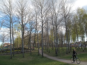 Bike riding through Växjö